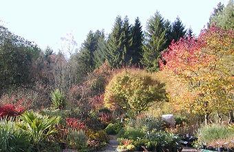 Copy of Autumn garden 7.jpg