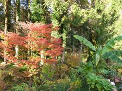 Autumn garden 3