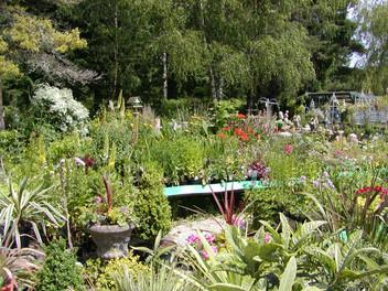 Perennial June