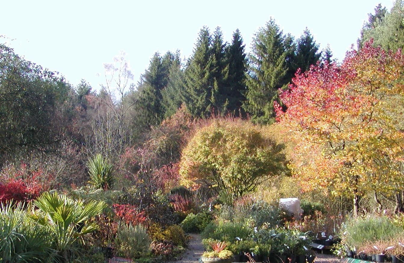 Autumn garden 7