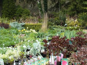Perennials Sales 1