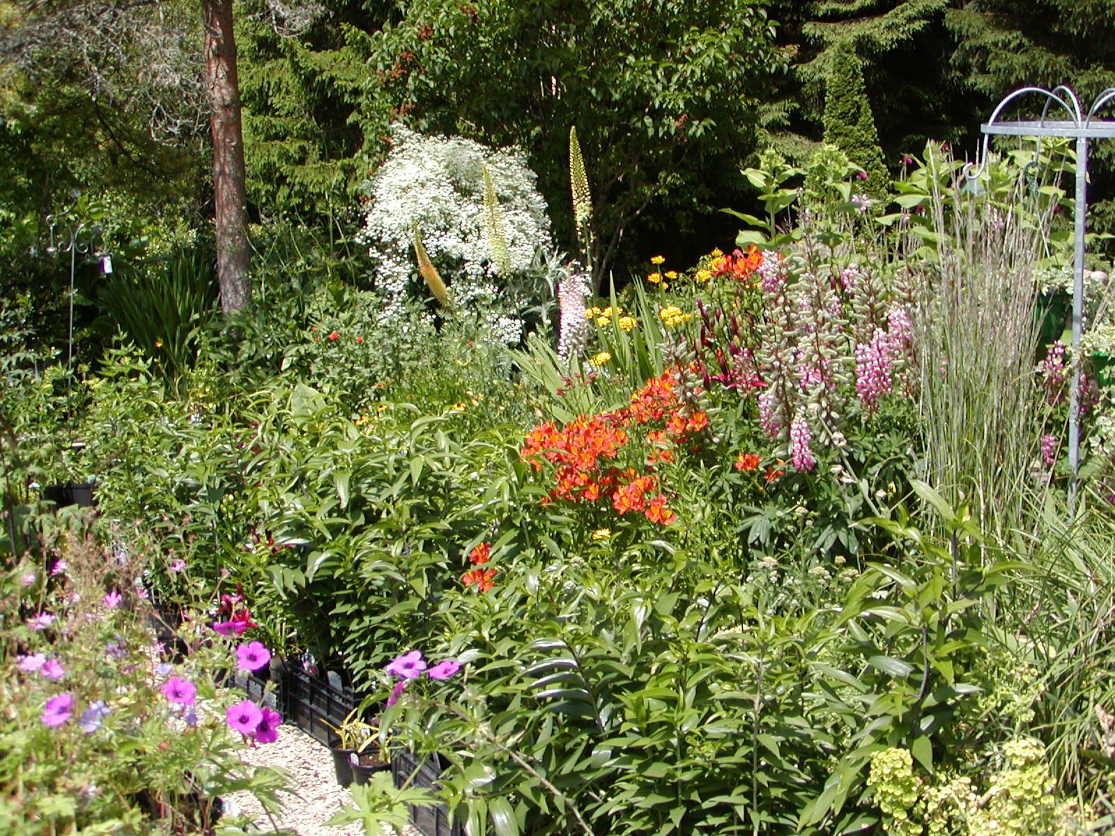 Garden-Jun-05 004