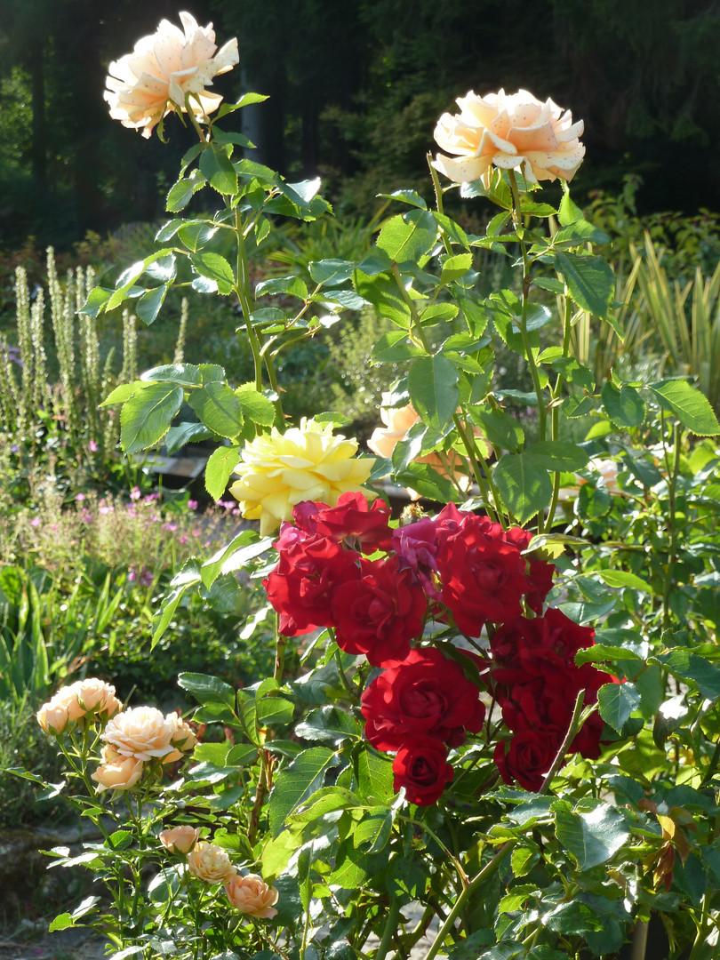 Sales Roses.JPG