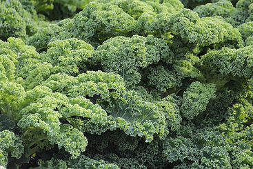 kale-vegetables-brassica-oleracea-var-sa
