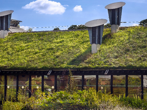 Green Roof: Good for the Planet… and Your Wallet