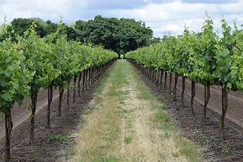 winery-3633009_1920.jpg