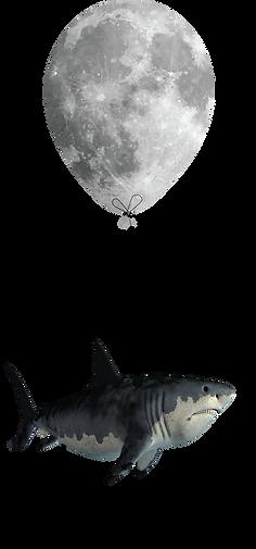 shark w moonballoon.png