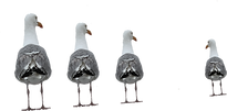 seagulls 4.png