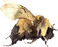 white removed bee 2020.png