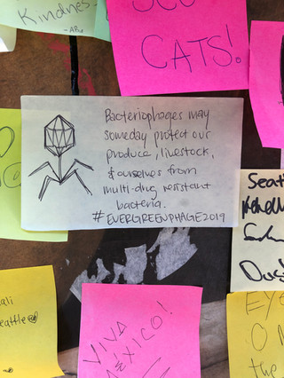 Phages taking over the Seattle Post-It Wall!