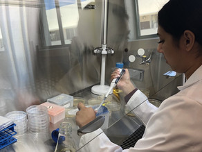 Undergrad Alex Villalba Joins the Lab