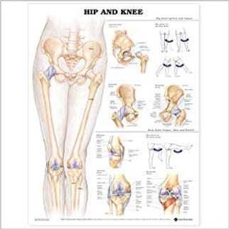 Hip and knee.jpg