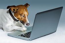 PC Dog