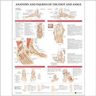 Ankle and foot.jpg