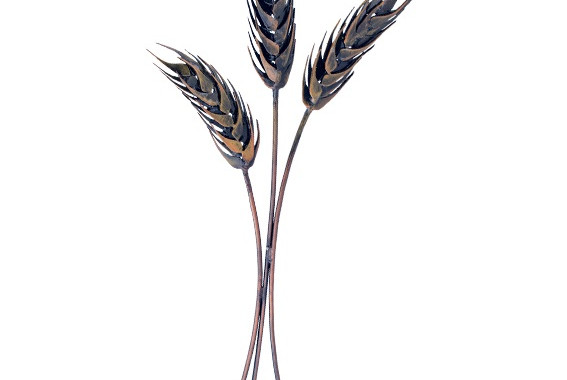 Year 34: Food - Wheat