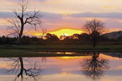 Wonga Wetlands sunrise