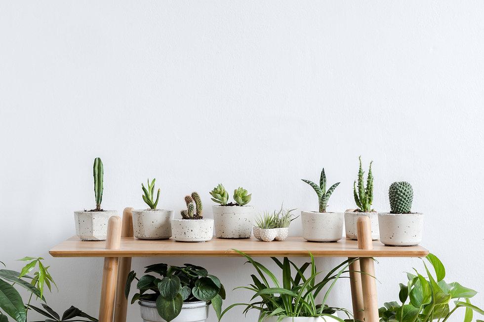 """alt=""""various plants in pots"""""""