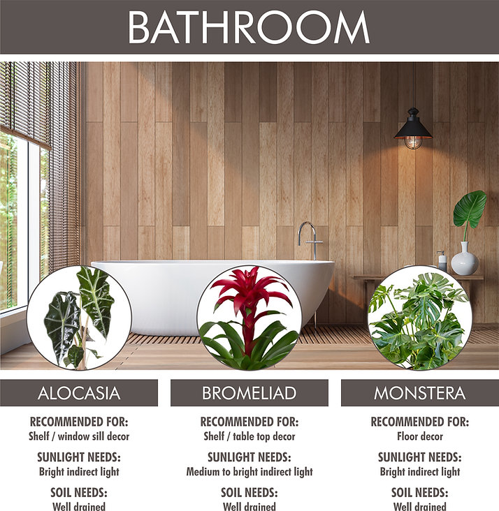 A picture for Bathroom plant suggestions. Shows a picture of a modern bathroom with three plants listed below, with pictures and text. Alocasia: recommended for shelf or window sill decor. Sunlight needs: bright indirect light. Soil needs: well drained. Bromeliad: recommended for shelf or table top decor. Sunlight needs: medium to bright indirect light. Soil needs: well drained. Monstera: recommended for floor decor. Sunlight needs: bright indirect light. Soil needs: well drained.
