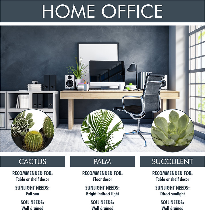 A picture for Home Office plant suggestions. Shows a picture of a modern home office with three plants listed below, with pictures and text. Cactus: recommended for table or shelf decor. Sunlight needs: full sun. Soil needs: well drained. Palm: recommended for floor decor. Sunlight needs: bright indirect light. Soil needs: well drained. Succulent: recommended for table or shelf decor. Sunlight needs: direct sunlight. Soil needs: well drained.
