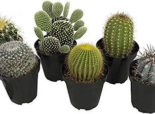 """alt=""""cactus"""""""
