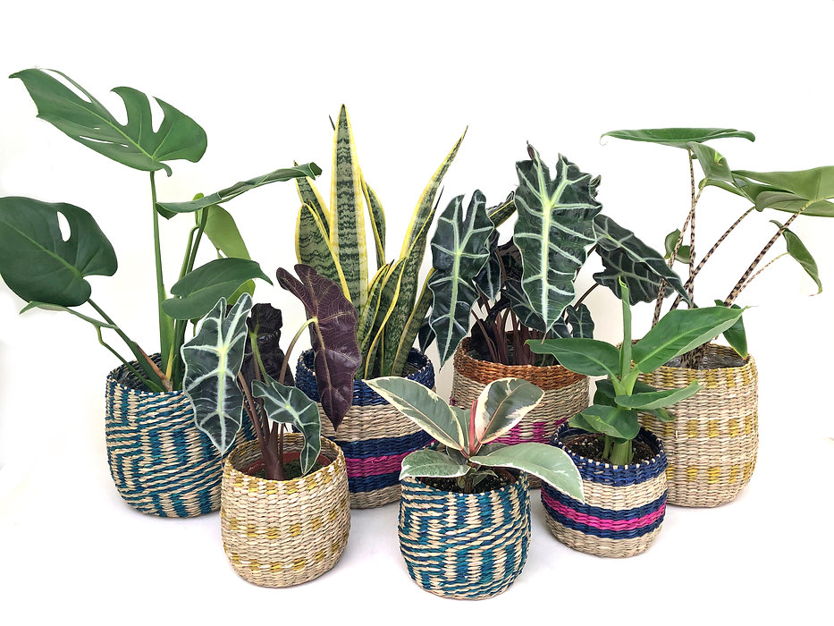 Our boho plant collection.