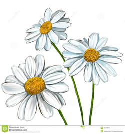 daisy-vector-illustration-hand-drawn-painted-stock-vector-image-0Q8CrQ-clipart