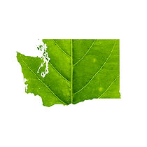 Map of Washington made of green leaf wit