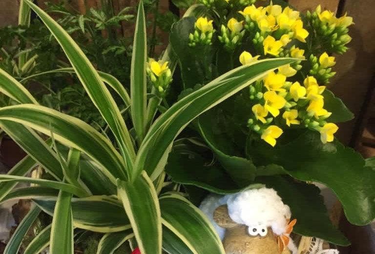 """Composizione piante """"Giardino di Pasqua"""""""