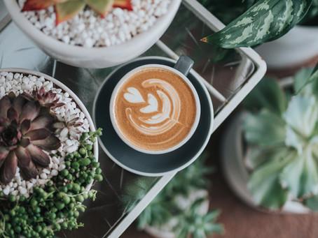 Senza il caffè non vivi? Scopri come può essere fondamentale anche per la vita delle tue piante.