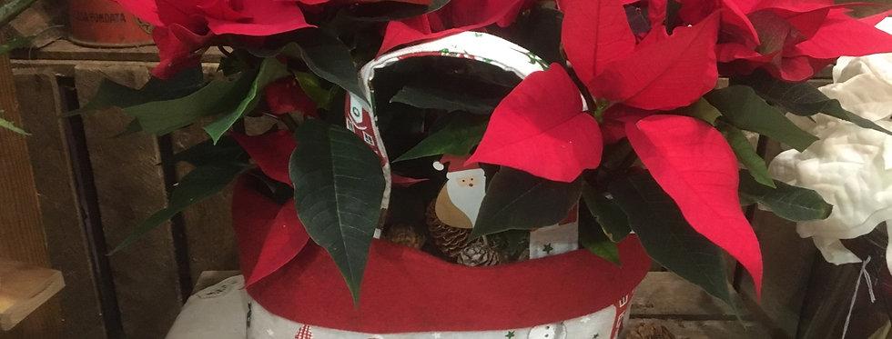 """Stelle di Natale """"Elf"""" Donna Clara"""