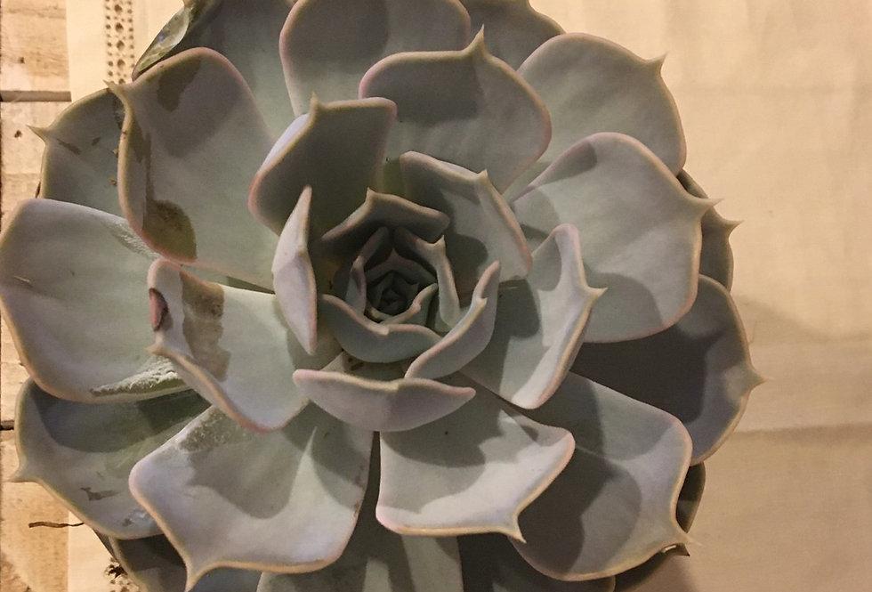 Nature geometriche