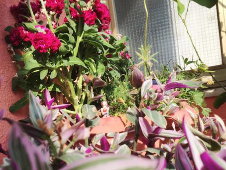 Gardening Tips. Le 3 attività di giardinaggio da fare nel mese di aprile