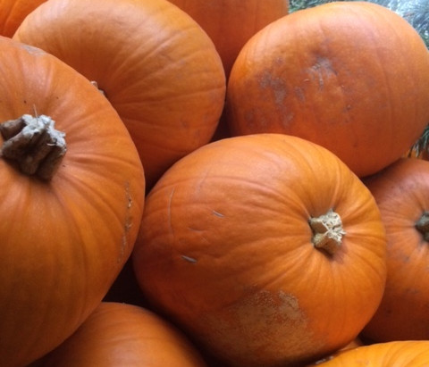 Seasonal Squash and Pumpkins