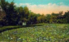 PARK 12 POSTCARD 2.jpeg