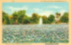PARK 11 POSTCARD 1.jpeg