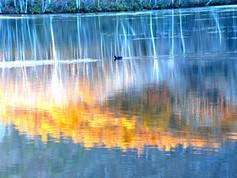 鏡池_秋の湖面.jpg