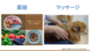 あきっと中医ペットクリニックの説明 (7).jpg