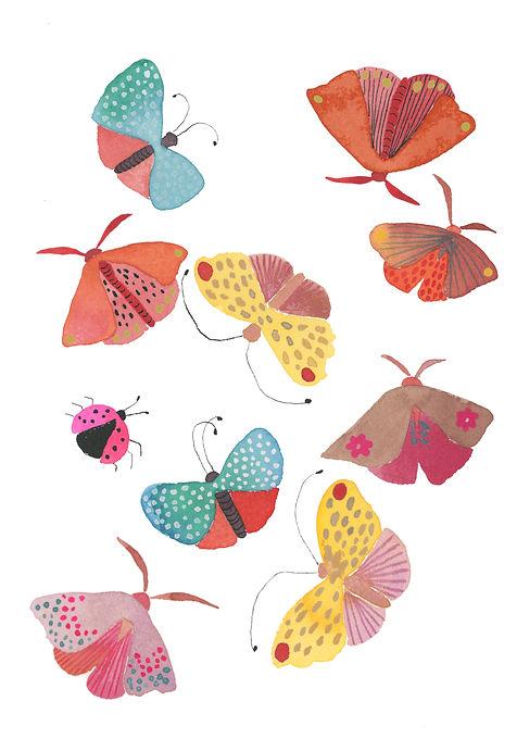 Butterflies Moths & Ladybug.jpg