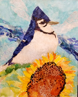 Blue Jay & Sunflower