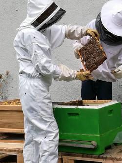 Unsere Bienen ziehen ein