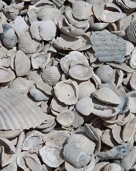 Medium-Shell-1024x682.jpg