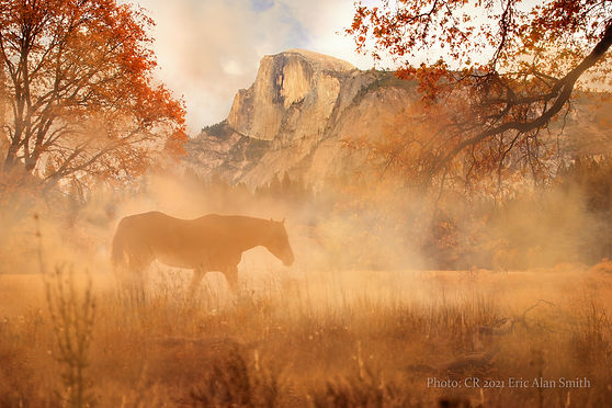 IMG_3822 horse & fog 3 sm cr.jpg