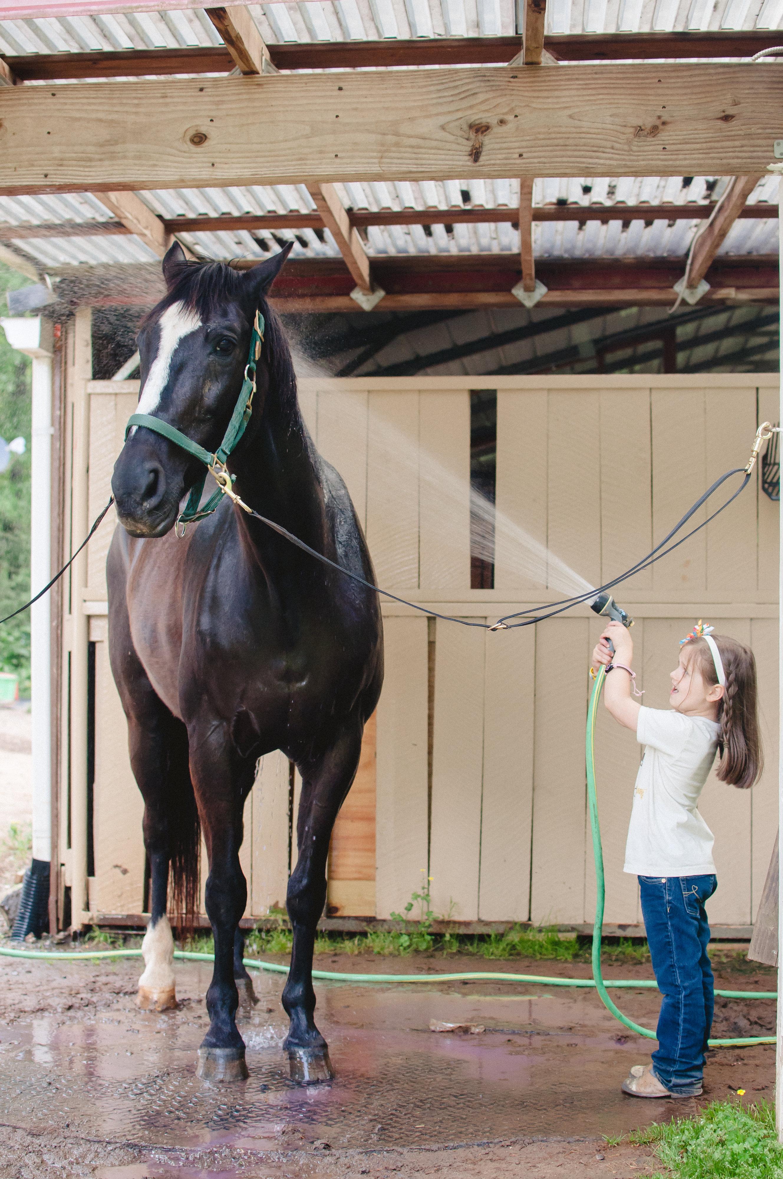 Little girl washing big horse