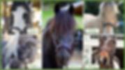 Adopt a Pony2.jpg
