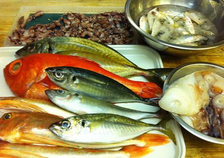 Fresh fish from Tsukiji