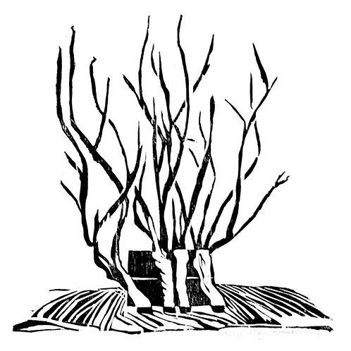 houtsnede - waterwilgen