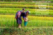 vietname2.jpeg