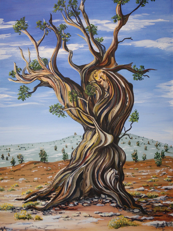 Bristlecone Pine 4