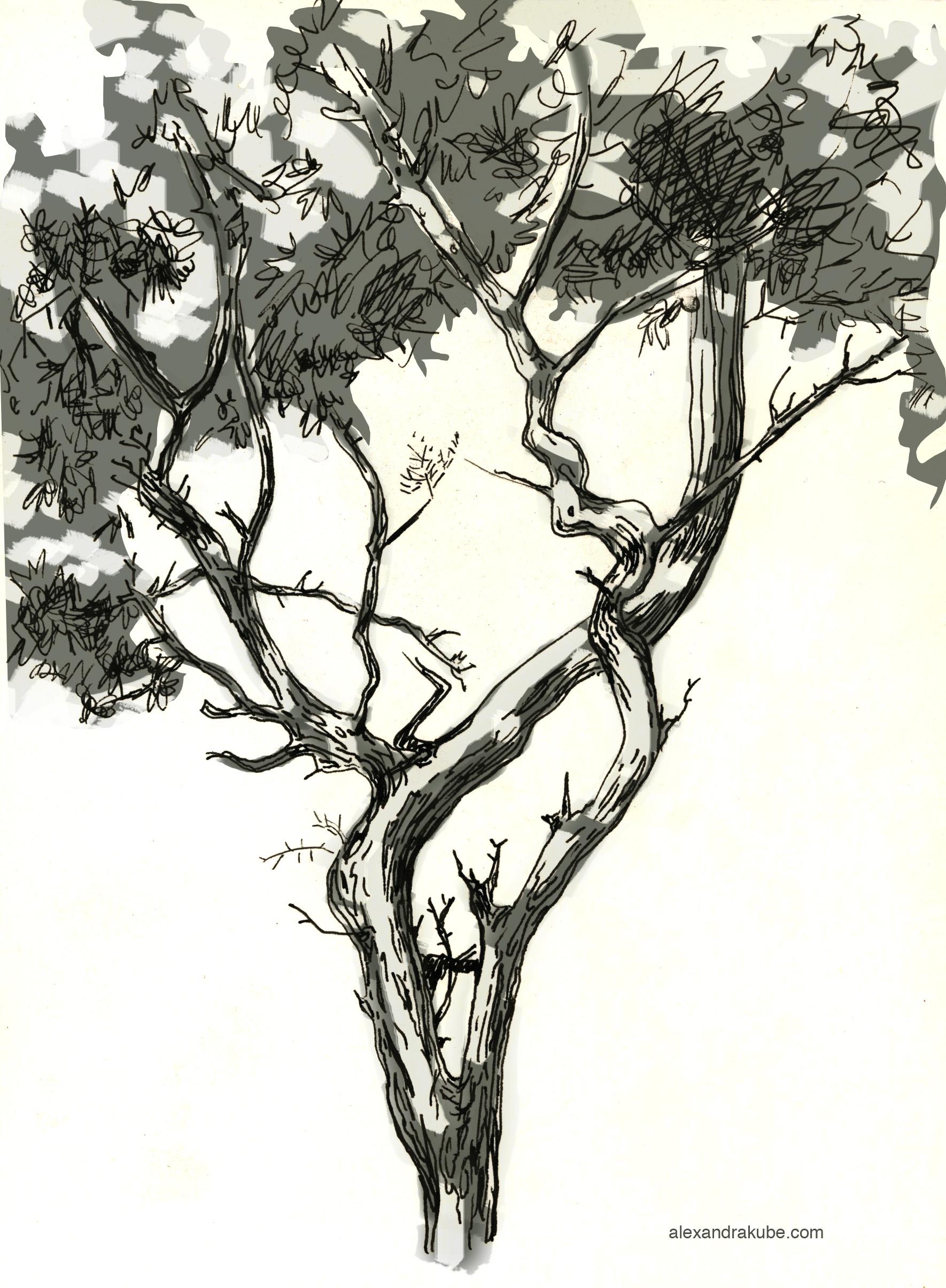 San Francisco Tree