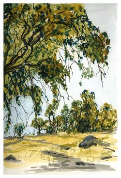 Bidwell Oak